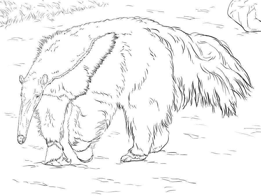 dibujos para colorear oso hormiguero imprimible gratis