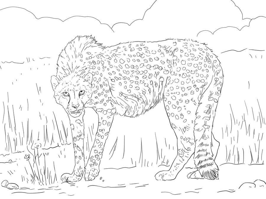 ausmalbilder gepard zum ausdrucken kostenlos für kinder