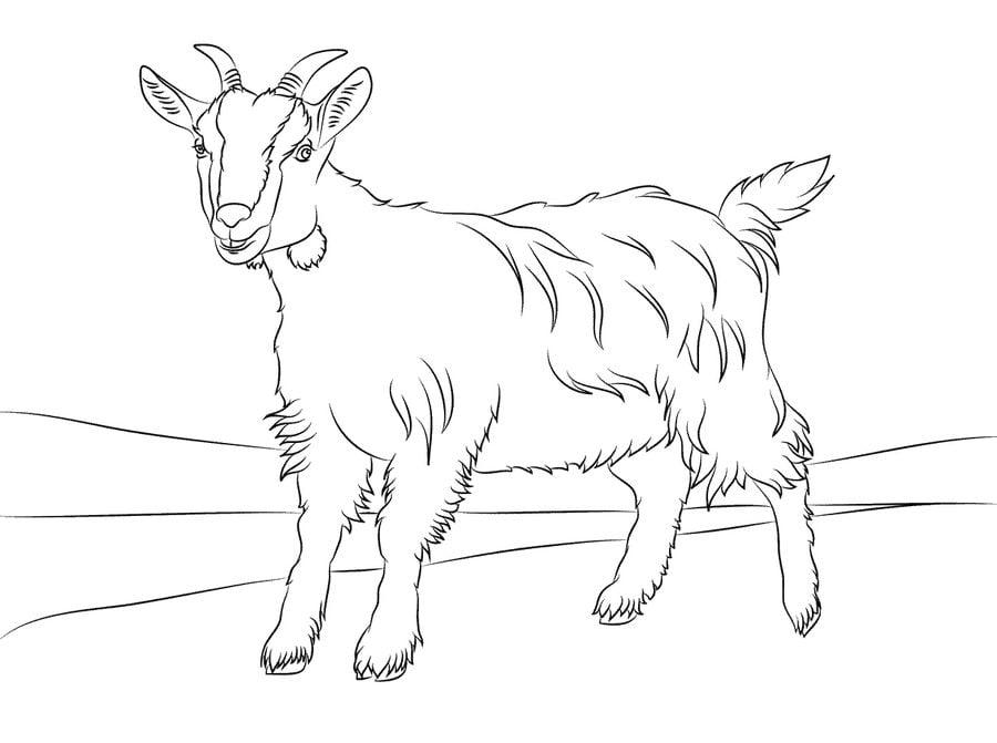 Disegni da colorare capre stampabile gratuito per - Immagini da colorare capra ...