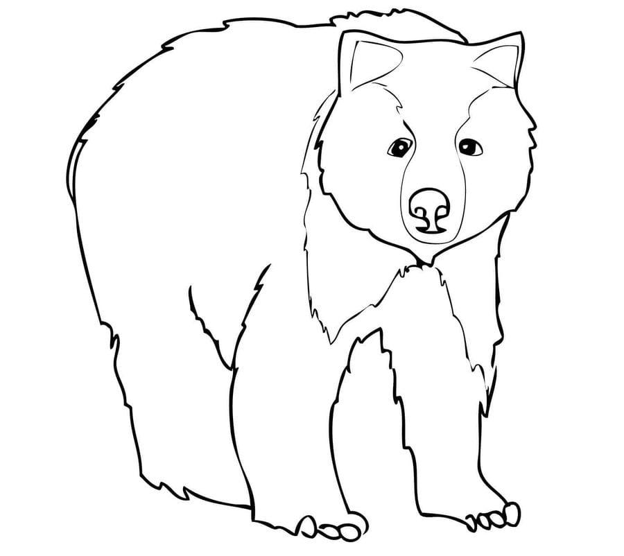 Disegni Da Colorare: Orsi Grizzly Stampabile, Gratuito