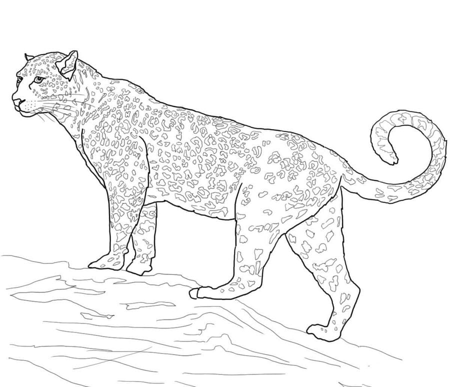 Coloring pages Jaguar printable
