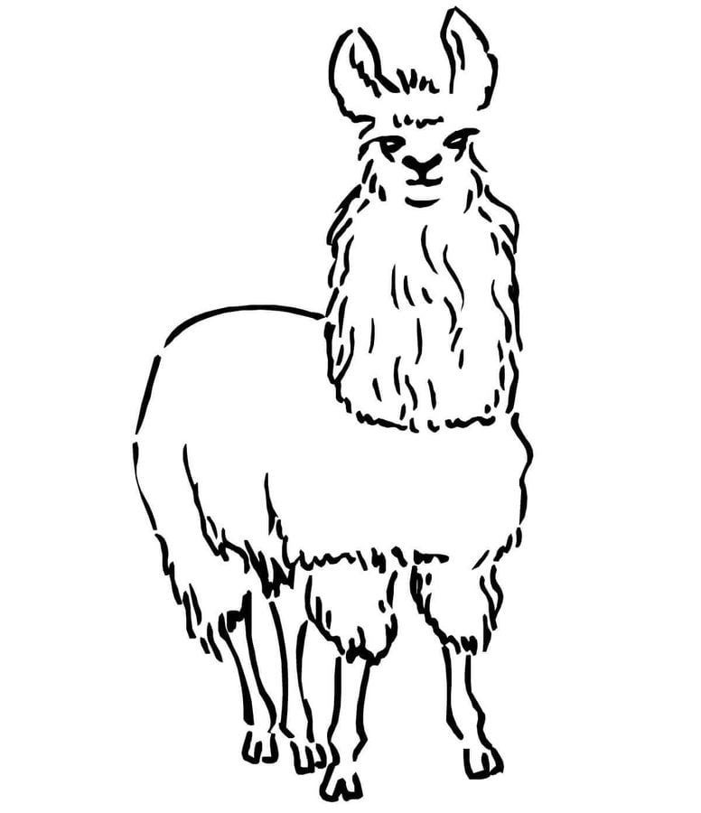 Coloring Pages Llama Printable For Kids Amp Adults Free