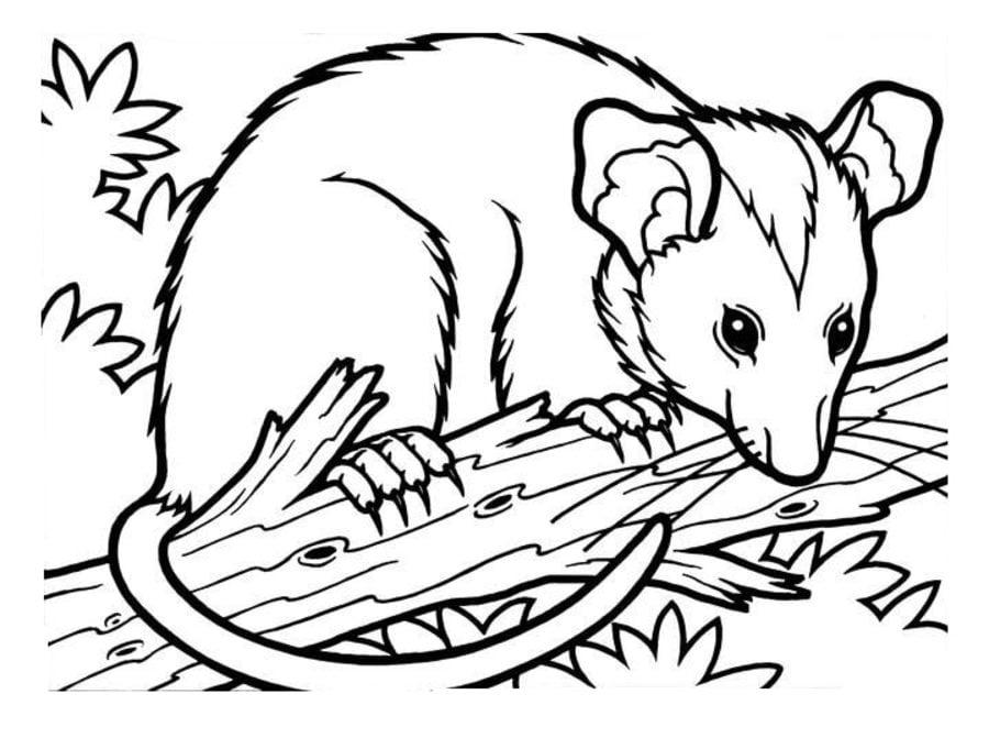 Fantastisch Opossum Malvorlagen Galerie - Ideen färben - blsbooks.com