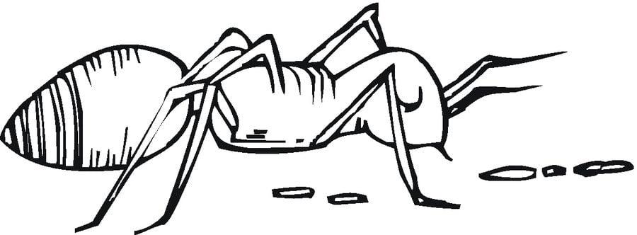 Dibujos De Hormigas Faciles. Dibujos De Hormigas Faciles. Ampliar ...