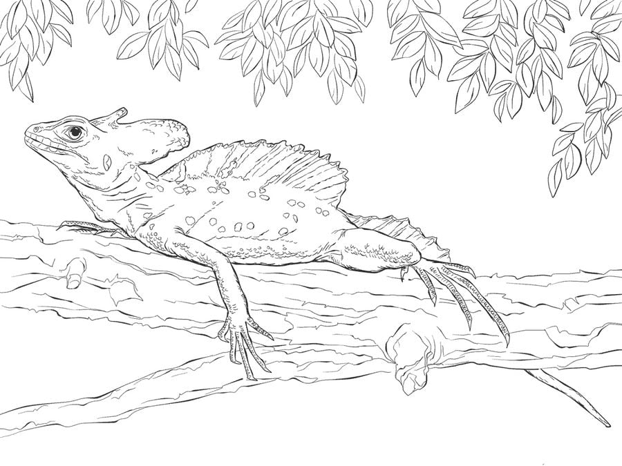 Coloring Pages Basilisk Lizard Printable For Kids Adults Free