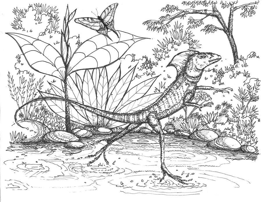 Coloring pages Basilisk lizard