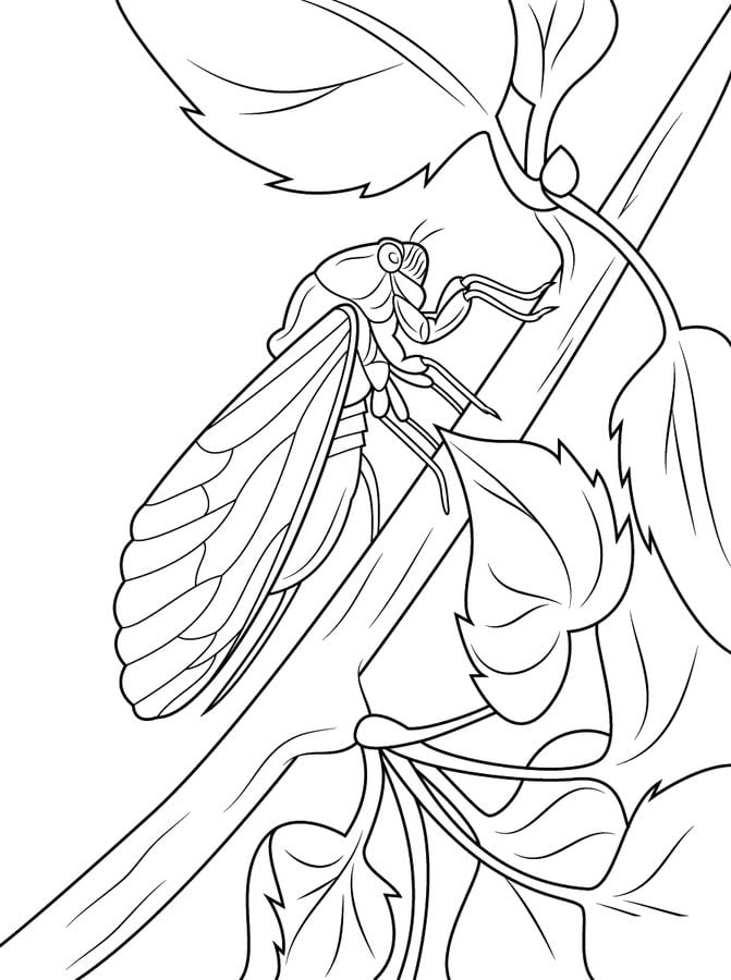 Coloring pages Cicada printable