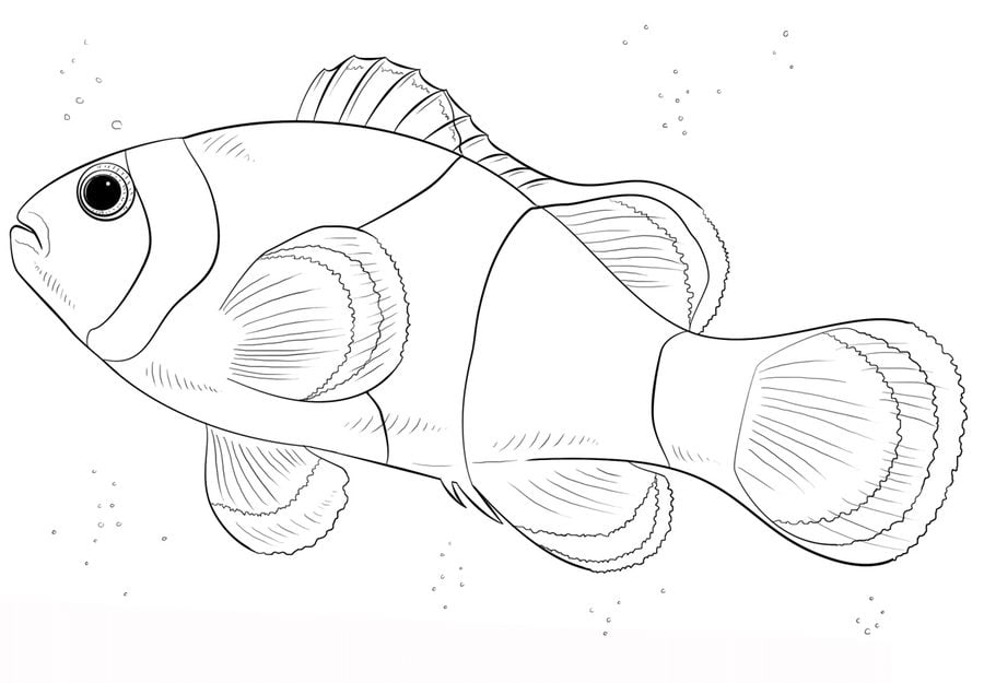 dibujos para colorear pez payaso imprimible gratis para