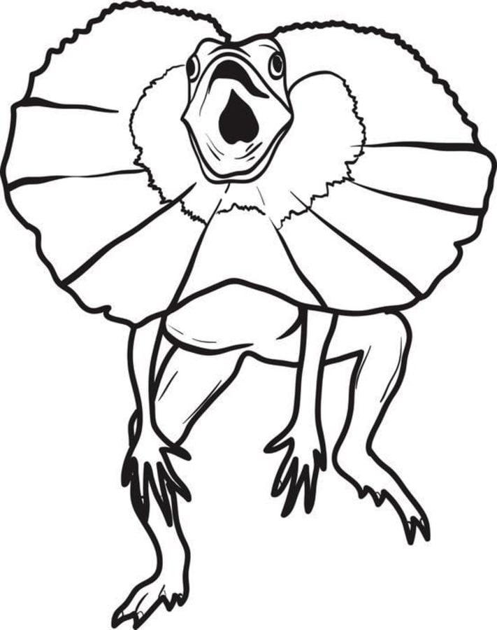 Coloring pages Frill necked lizard printable for kids adults free