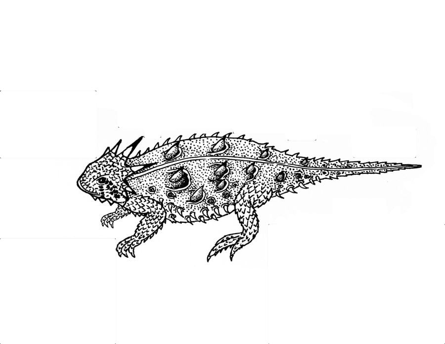 Coloring pages Horned lizard