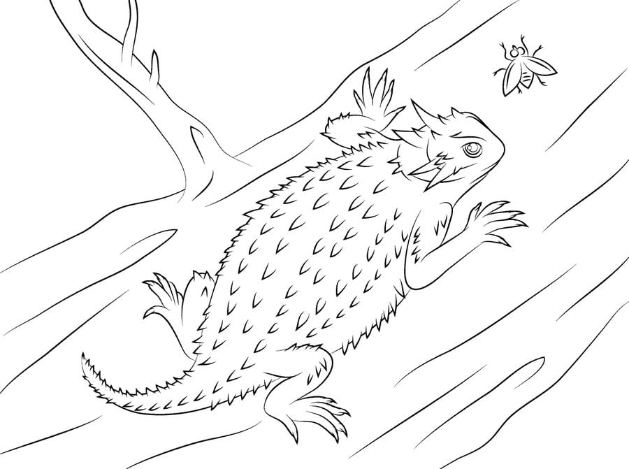 Coloring Pages Horned Lizard Printable For Kids Amp Adults