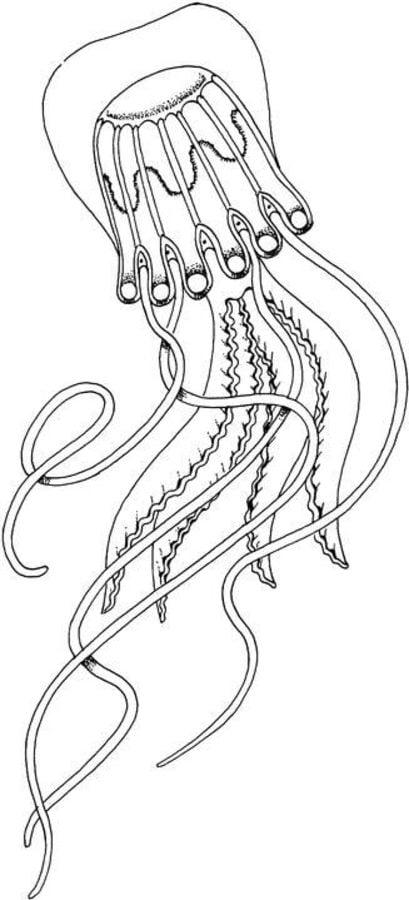 Disegni da colorare medusa stampabile gratuito per for Medusa da colorare