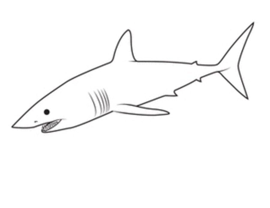 Disegni da colorare squalo mako stampabile gratuito per for Disegno squalo per bambini