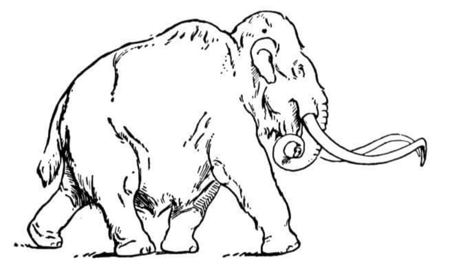 dibujos para colorear mamut imprimible gratis para los