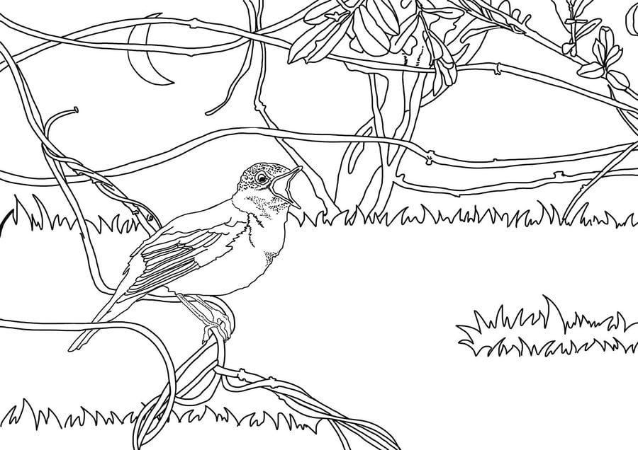 Coloring pages Nightingales printable for kids adults free
