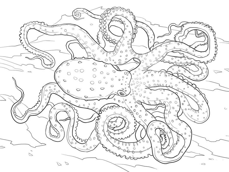 Coloring pages Octopus printable