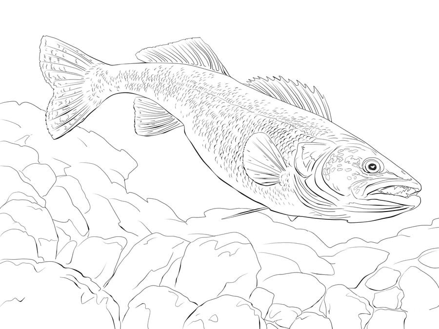 Coloring pages Pike printable for kids adults free