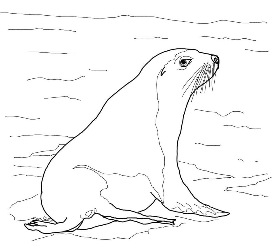 Coloring pages Sea lions printable for kids adults free