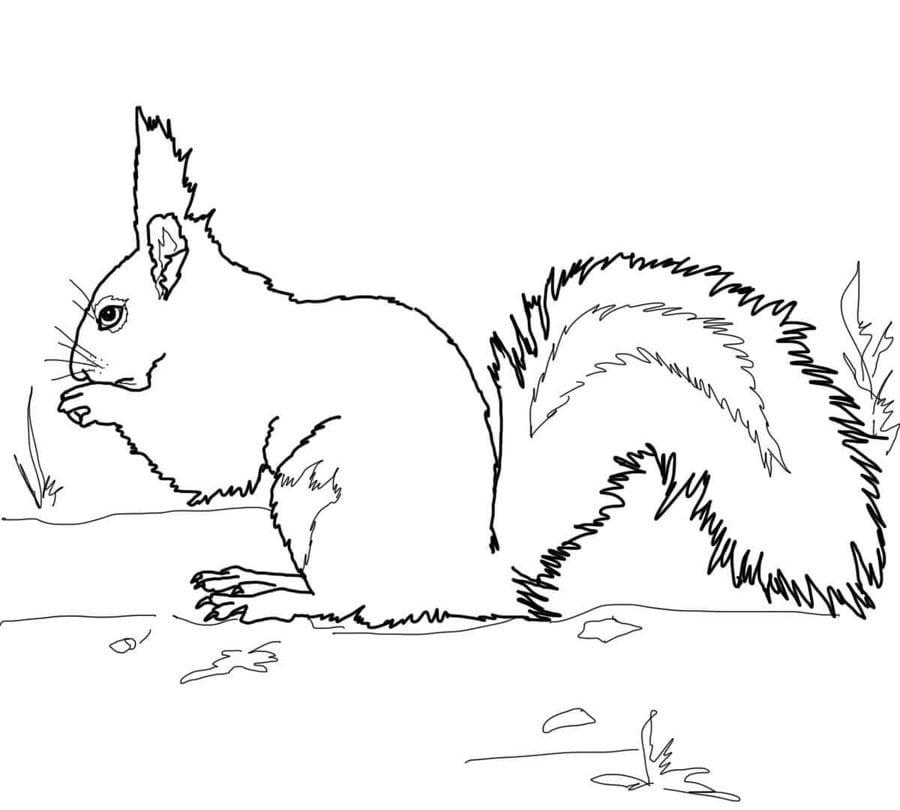 ausmalbilder eichhörnchen zum ausdrucken kostenlos für