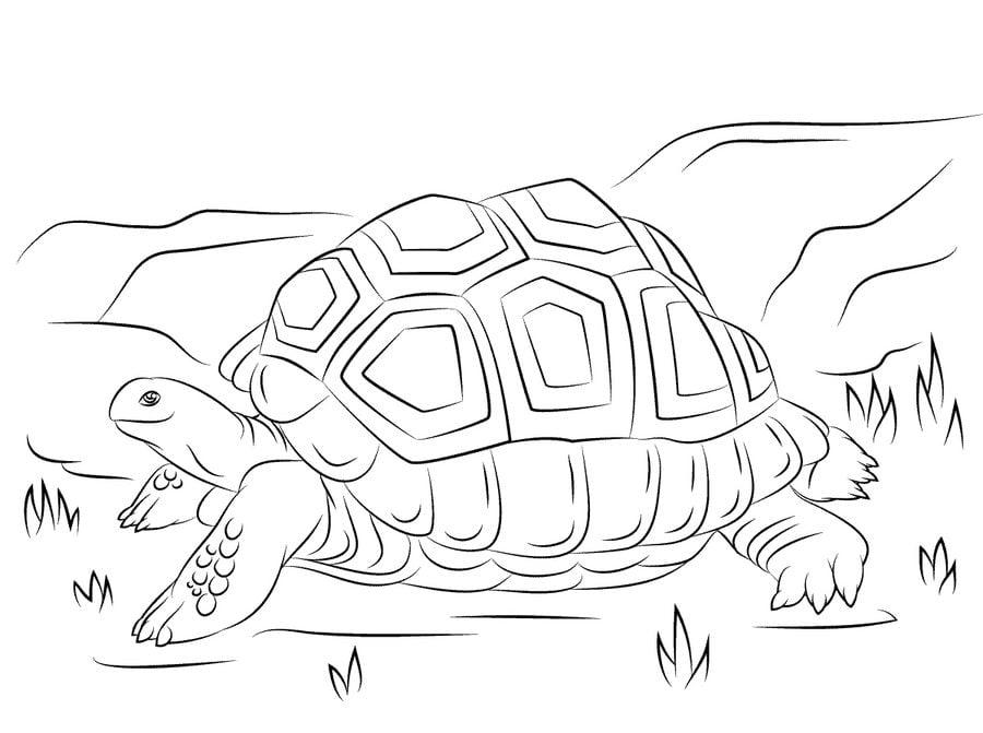 ausmalbilder schildkröte zum ausdrucken kostenlos für