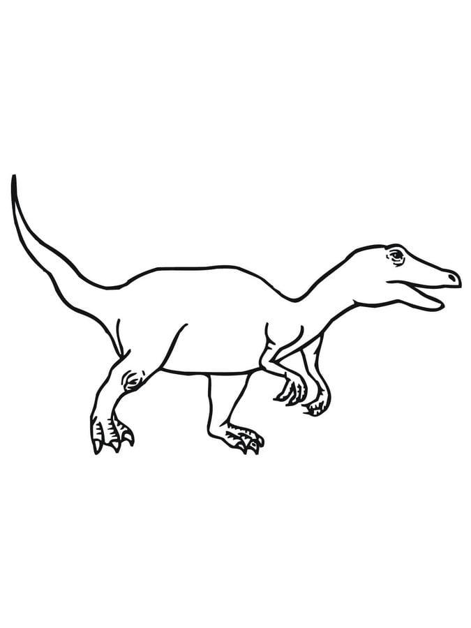 dibujos para colorear  velociraptor imprimible  gratis