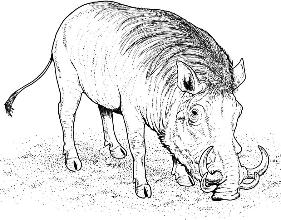 ausmalbilder warzenschwein zum ausdrucken kostenlos für