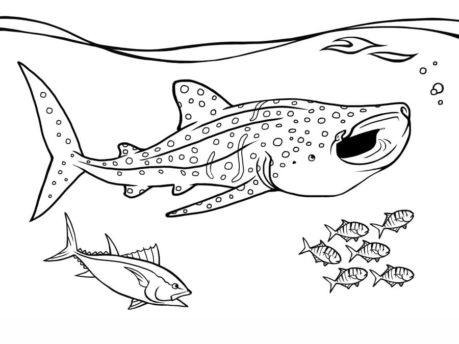 blue shark coloring pages - photo#37
