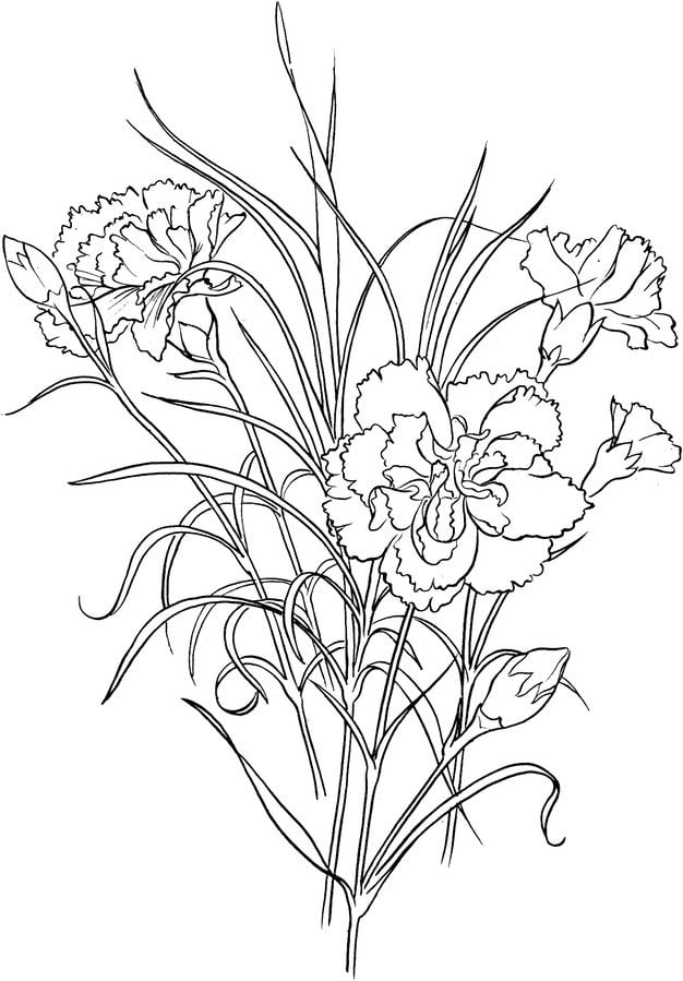 Carnation Flowers coloring page from Carnation category. Select ... | 899x626