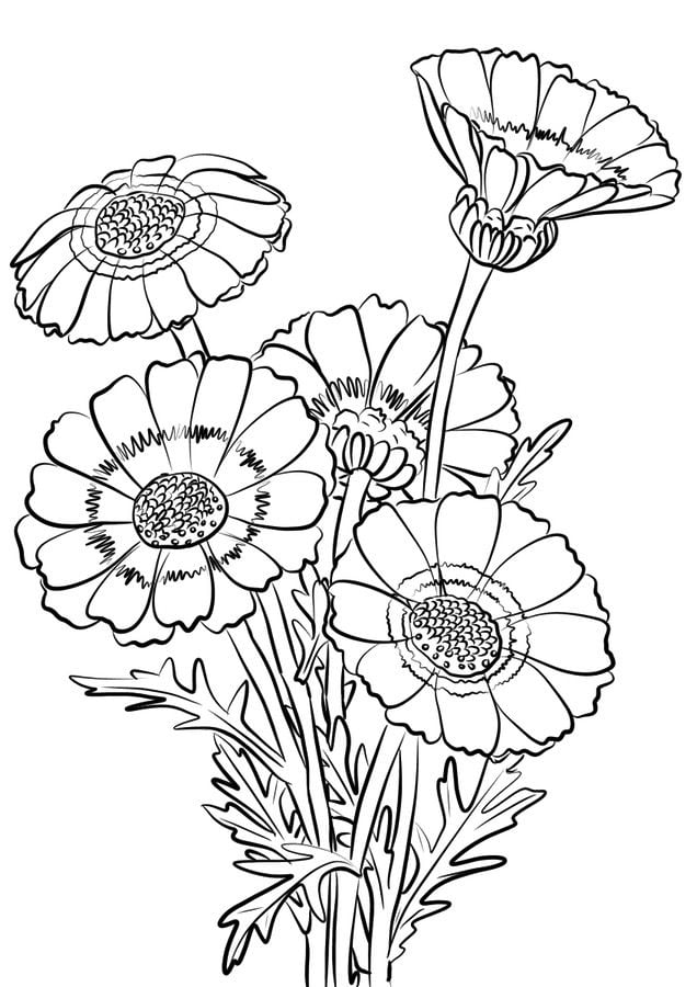 Coloring Pages Coloring Pages Chrysanthemum Printable