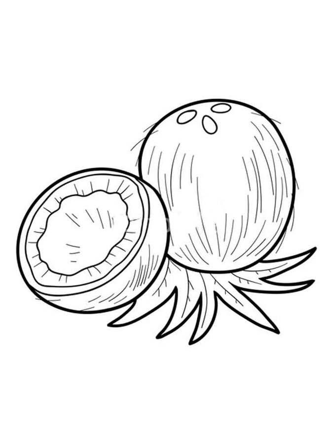 Ausmalbilder Ausmalbilder Kokospalme Zum Ausdrucken