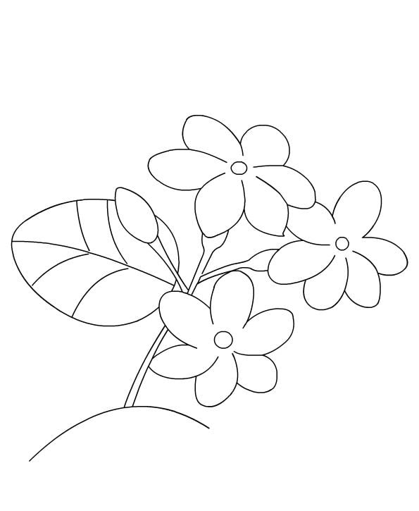 Free Printable Jasmine Coloring Pages For Kids Best Coloring Pages ... | 725x595