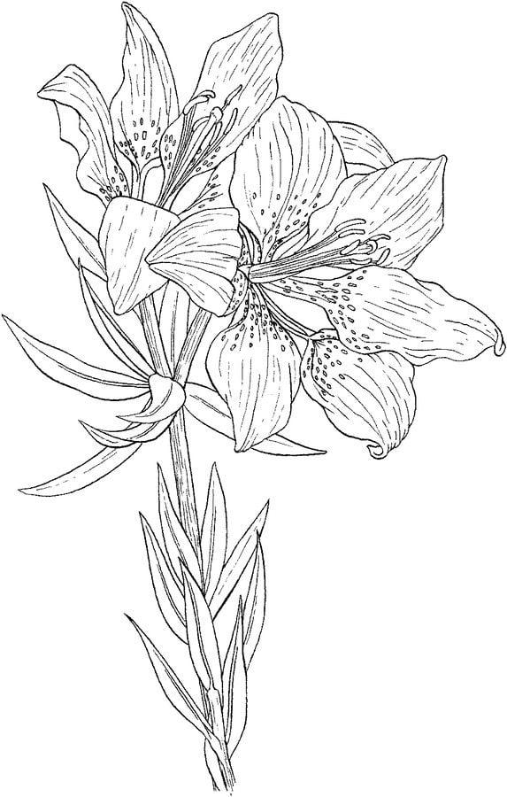 ausmalbilder ausmalbilder lilien zum ausdrucken