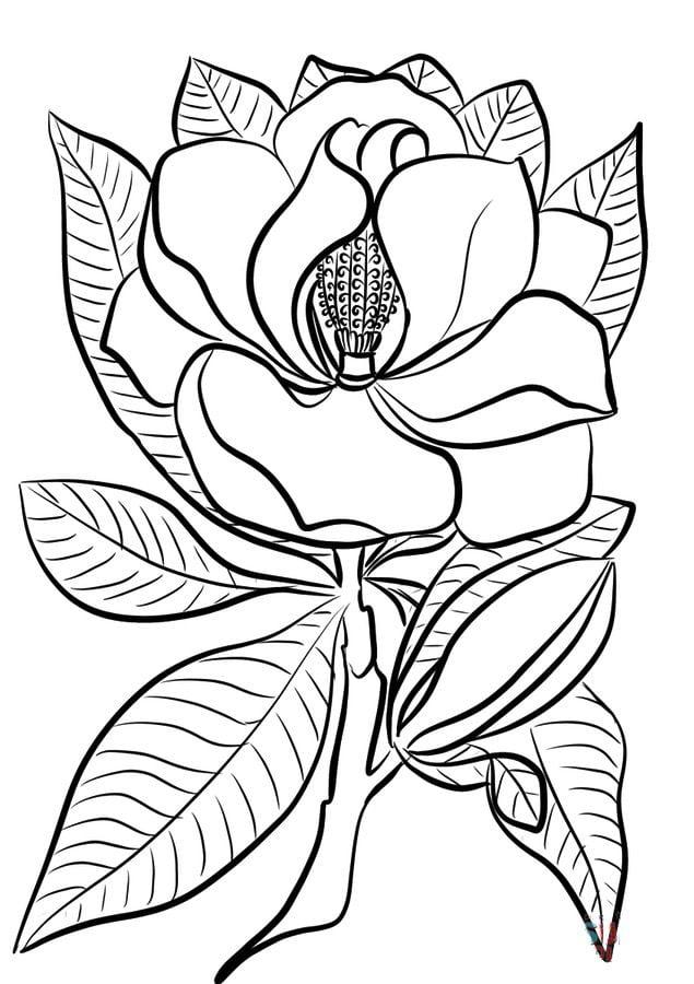 Kolorowanki Komiksy Do Druku Za Darmo Dla Dzieci I: Kolorowanki: Kolorowanki: Magnolia Do Druku Dla Dzieci I