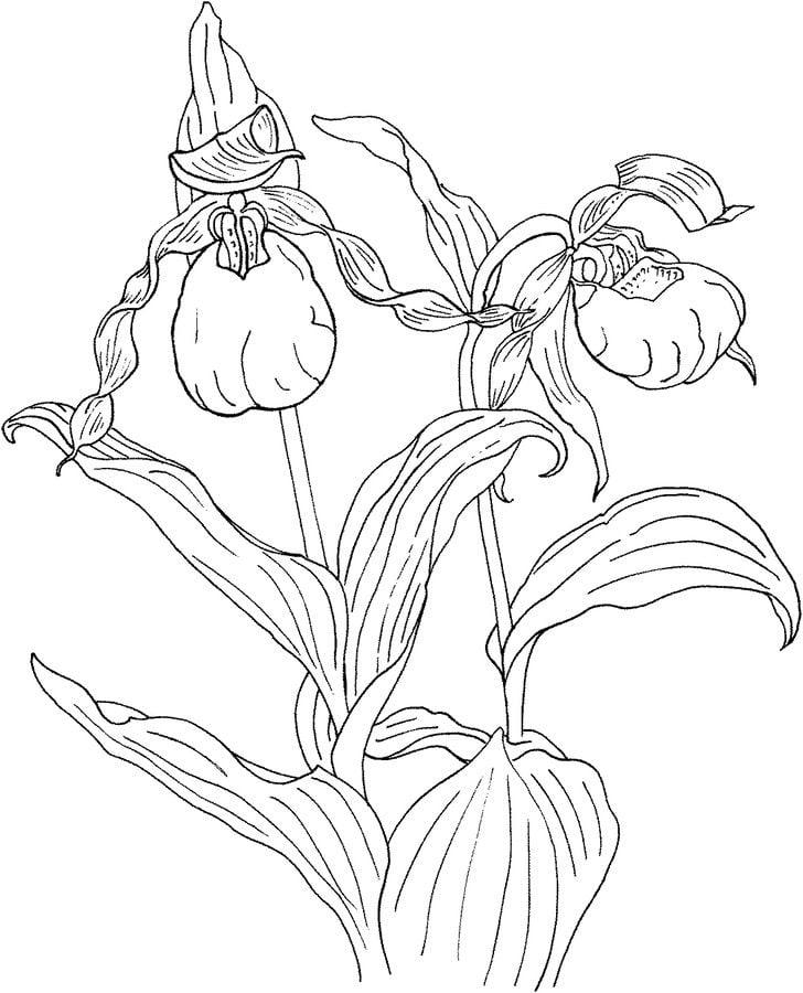 ausmalbilder ausmalbilder orchidee zum ausdrucken
