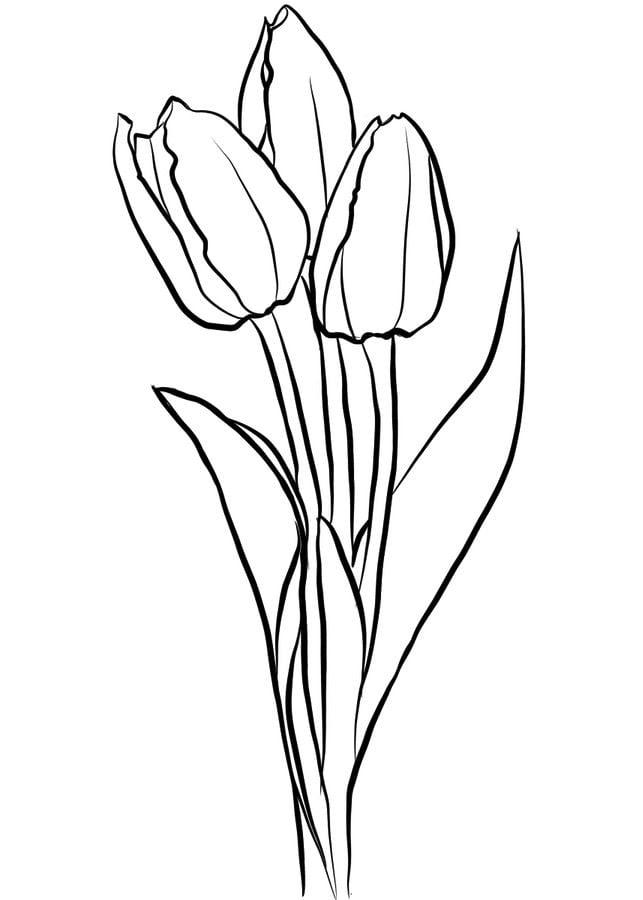 Ausmalbilder Ausmalbilder Tulpen Zum Ausdrucken Kostenlos Für