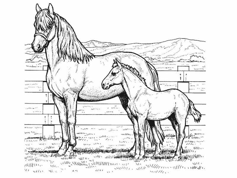 Kolorowanki Dla Doroslych Konie Do Druku Pobrania Za Darmo Jpg Pdf