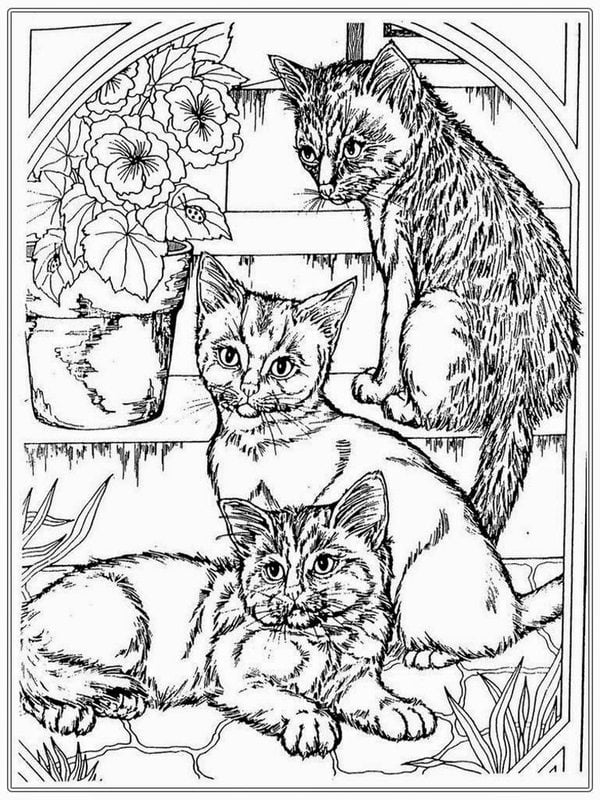 ausmalbilder für erwachsene katzen zum ausdrucken