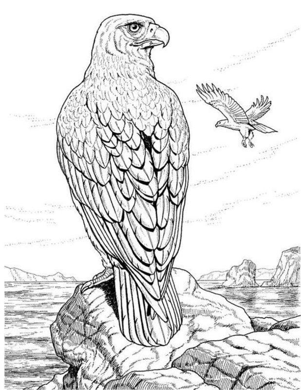 Dibujos Para Colorear Para Adultos Aves Imprimible Gratis Jpg Pdf