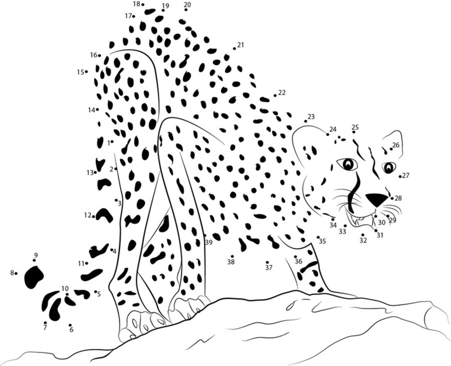 Connect the dots Cheetah printable for kids adults free