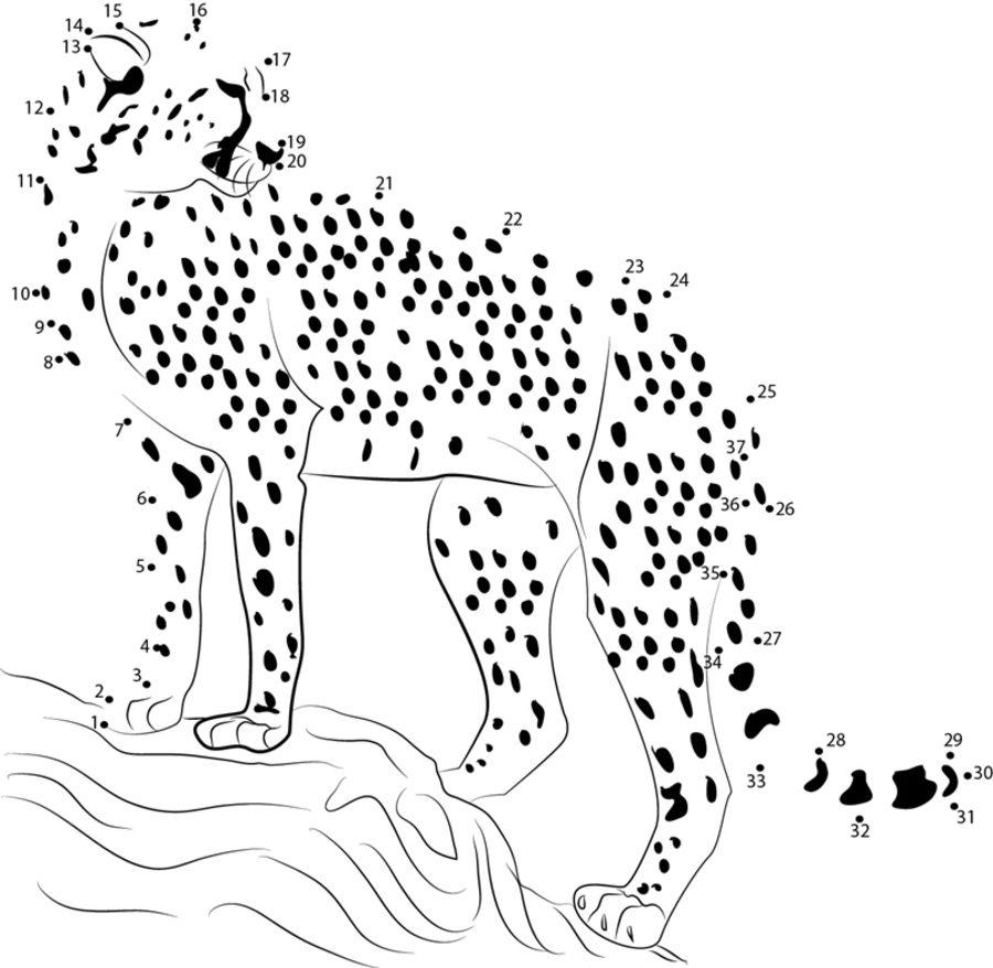 Unir puntos: Guepardo imprimible, gratis, para los niños y los adultos