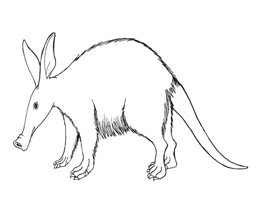 Dibujos para colorear: Cerdo hormiguero imprimible, gratis, para los ...