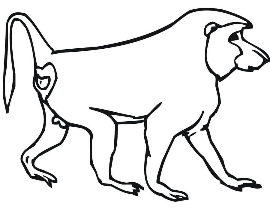 Ausmalbilder ausmalbilder pavian zum ausdrucken kostenlos f r kinder und erwachsene - Dessin de babouin ...