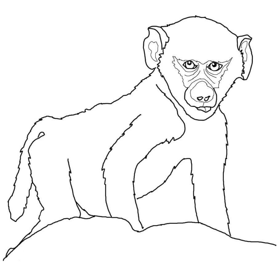 Dibujos para colorear: Babuino imprimible, gratis, para los niños y ...