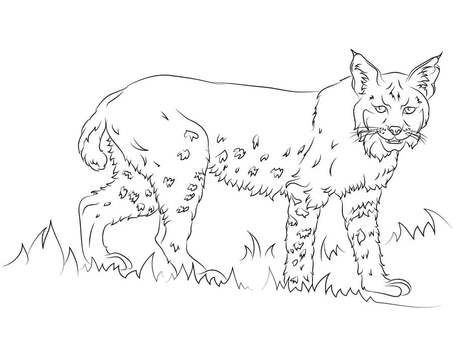 Coloring Pages Coloring Pages Bobcat Printable For Kids Adults