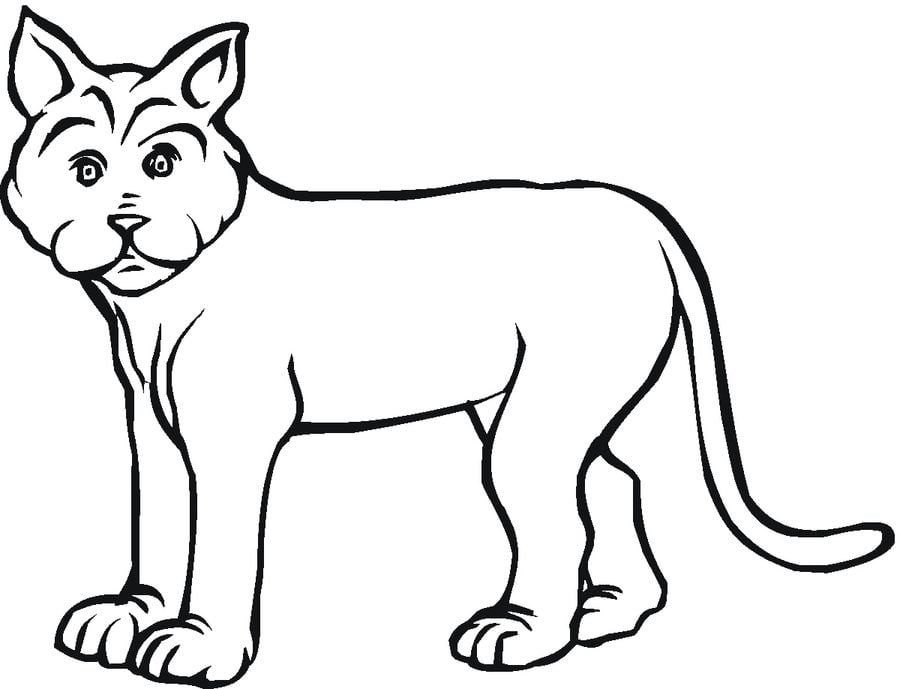 Coloring pages Bobcat printable