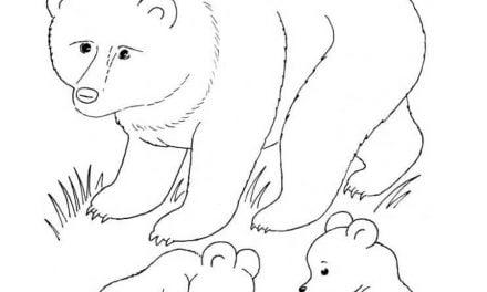 Kolorowanki: Niedźwiedź brunatny