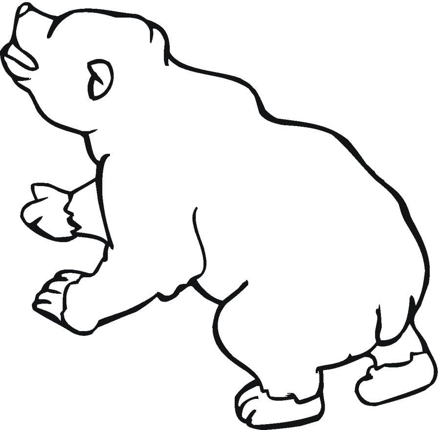 Kolorowanki nied wied brunatny do druku dla dzieci i for Disegno orso per bambini