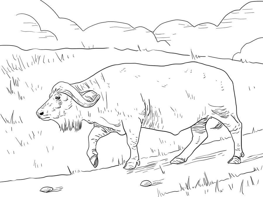 макеева позировала бизон картинки разукрасить животного шкаф должен быть
