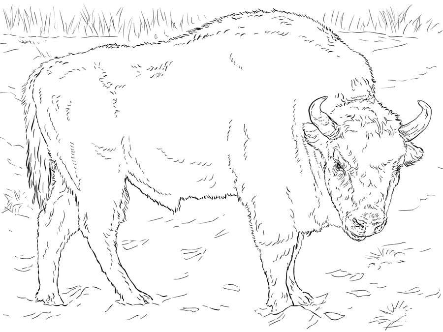 Disegni da colorare bufalo stampabile gratuito per