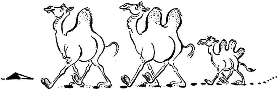 Ausmalbilder Kamele zum ausdrucken kostenlos fr Kinder und